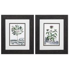 Munting Garden Wall Art, Pack Of 2