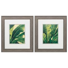 Palms   Wall Art, Pack of 2