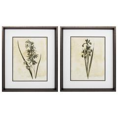 Floral Wall Art, Pack Of 2