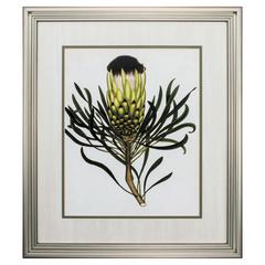 Antique Protea Ii Wall Art