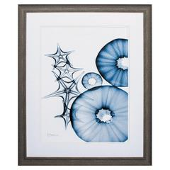 Indigo Aquatic I Wall Art