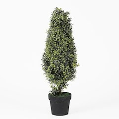 "Orchid Tree Topiary 30""H"