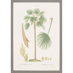 Island Botanical I