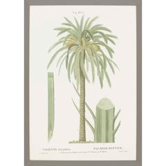 Island Botanical II