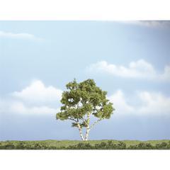 """4"""" Premium Trees Birch Tree"""
