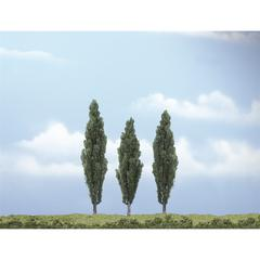 "3""-5"" Premium Trees Poplar Tree"