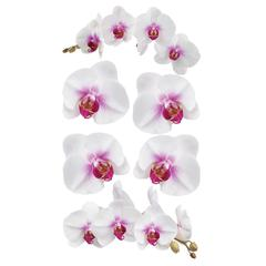 Photo Stickers White Orchids