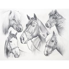 Large Sketching By Numbers Horse Montage
