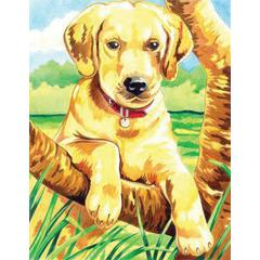 Medium Colored Pencil By Numbers Labrador