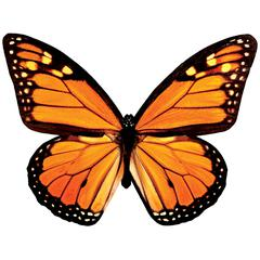 Paper House Productions Monarch Butterfly Puzzle Shapes
