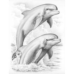 Medium Sketching by Numbers Dolphins