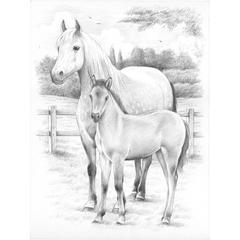 Medium Sketching by Numbers Horse & Foal