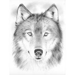 Medium Sketching by Numbers Wolf
