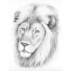 Medium Sketching by Numbers Lion