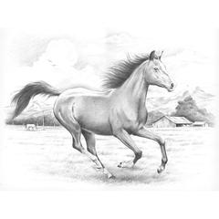 Large Sketching by Numbers Galloping Horses