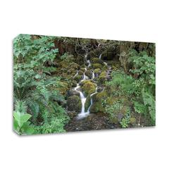 Fern Waterfall by Lynda White, Print on Canvas, Ready to Hang