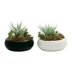 Benzara Alluring 2 Assorted Pvc Ceramic Succulent