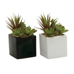 Benzara Captivating 2 Assorted Pvc Ceramic Succulent
