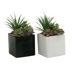 Benzara Appealing 2 Assorted Pvc Ceramic Succulent