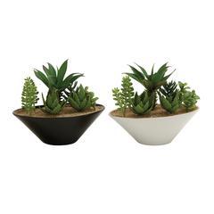 Benzara Mesmerizing 2 Assorted Pvc Ceramic Succulent