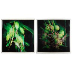 Botanical Photography Cotton Canvas Wall Art , Green, Set of 2,