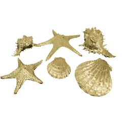 Attractive Gold Resin Sea Shell Decoration