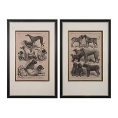 Sterling International Dog Show I, II - Fine Art Giclee Under Glass