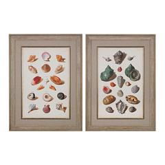 Sterling Muller Shells V, VI - Fine Art Giclee Under Glass