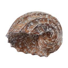 Wooden Helix Shell