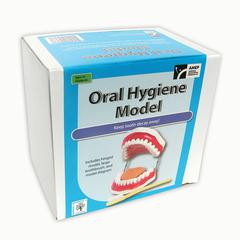 AMERICAN EDUCATIONAL PROD ORAL HYGIENE MODEL