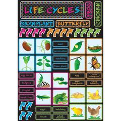 """Ashley Life Cycles Mini Bulletin Board Set - Write on/Wipe off, Built-in Magnet - 12"""" Width x 17"""" Depth - Multicolor - 1 / Set"""