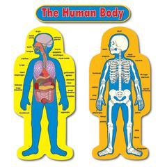 BB SET CHILD-SIZE HUMAN BODY 2 FIGURES 50T