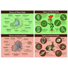 ANIMAL & PLANT CELLS BB SET