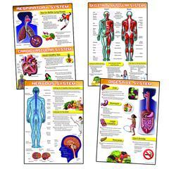 CARSON DELLOSA HUMAN BODY AND HEALTH TIPS BB SET