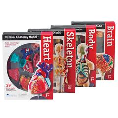 LEARNING RESOURCES MODEL ANATOMY BUNDLE SET OF 132