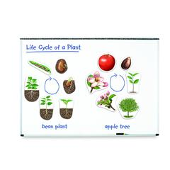 LEARNING RESOURCES GIANT MAGNETIC PLANT LIFE CYCLES