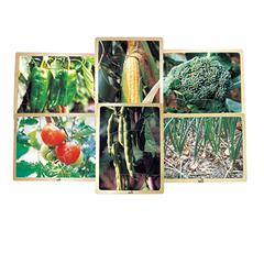 MOJO EDUCATION GROWING UP GREEN FRUITS PUZZLE