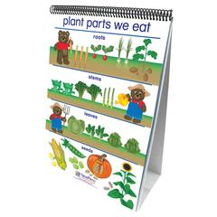 FLIP CHARTS ALL ABOUT PLANTS EARLY CHILDHOOD SCIENCE READINESS