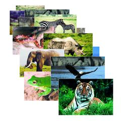 STAGES LEARNING MATERIALS WILD ANIMAL POSTER SET SET OF 10