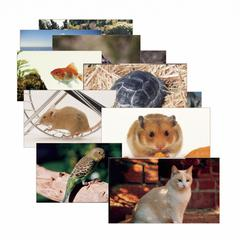 STAGES LEARNING MATERIALS PETS 14 POSTER CARDS