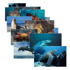STAGES LEARNING MATERIALS SEA LIFE 14 POSTER CARDS