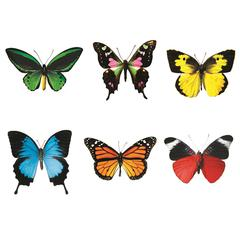 CLASSIC ACCENTS BUTTERFLIES VARIETY PKS DISCOVERY