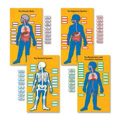 "Human Body Bulletin Board Set - 0.06"" Height x 20"" Width x 29.50"" Length - Multicolor - 1 Pack"