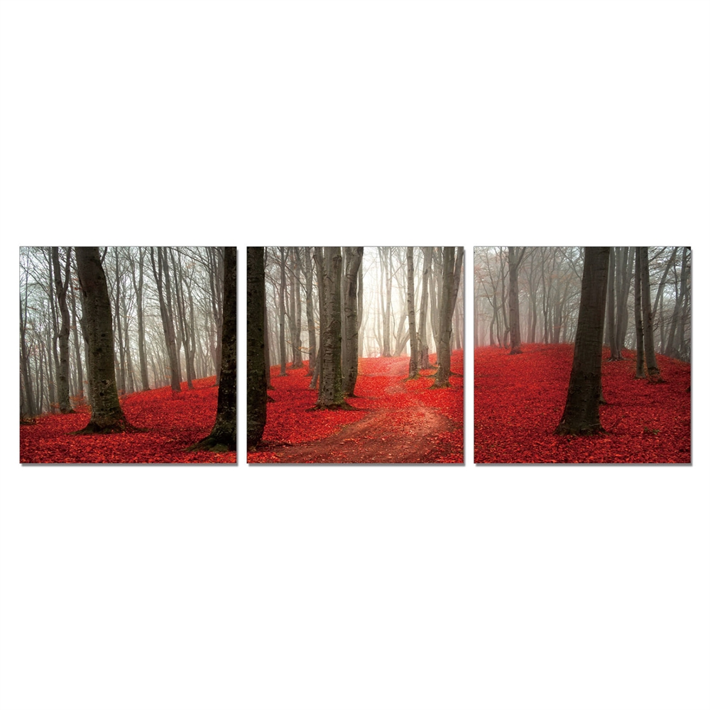 SeniA Wall Mounted Triptych Photography Prints, Dawn Forest, Set of Three. Picture 1