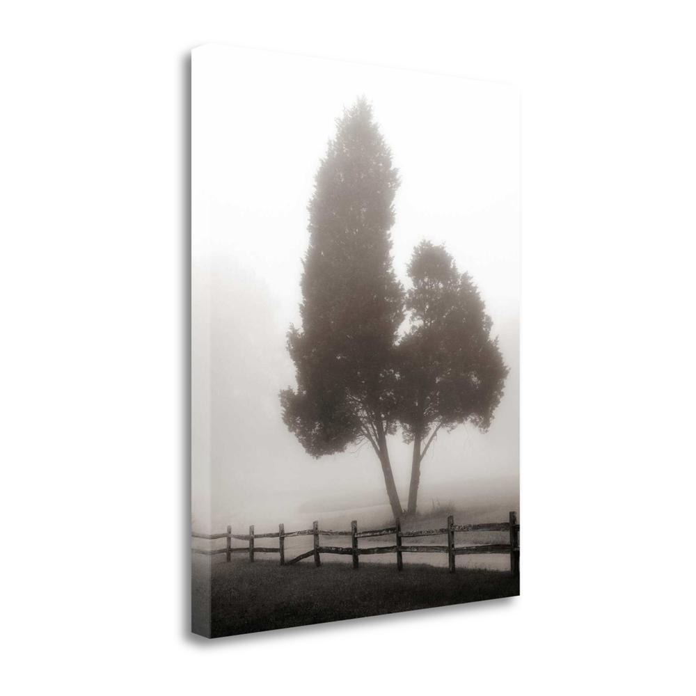 """""""Cedar Tree And Fence"""" By Nicholas Bell, Giclee Print on Gallery Wrap Canvas. Picture 1"""
