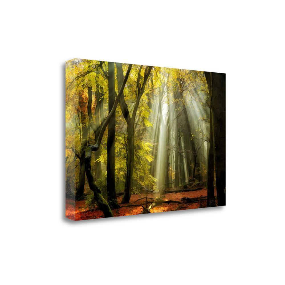 """Yellow Leaves Rays"" By Lars Van De Goor, Giclee Print on Gallery Wrap Canvas. Picture 1"