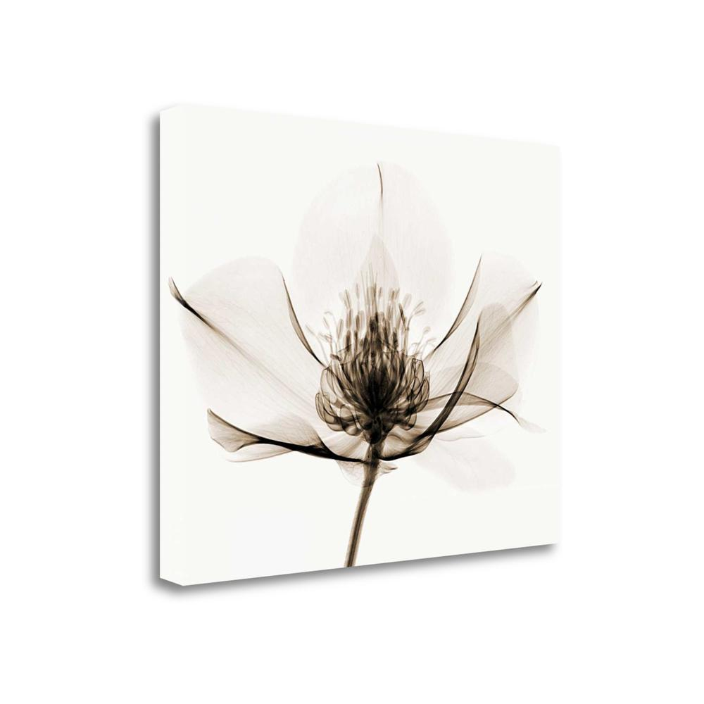 """Hellebore I"" By Robert Coop, Fine Art Giclee Print on Gallery Wrap Canvas. The main picture."