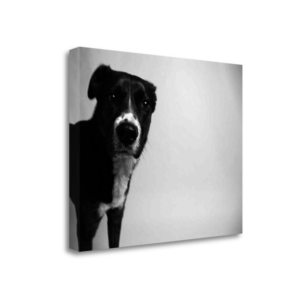 """""""Reilly"""" By Kim Levin, Fine Art Giclee Print on Gallery Wrap Canvas. Picture 1"""