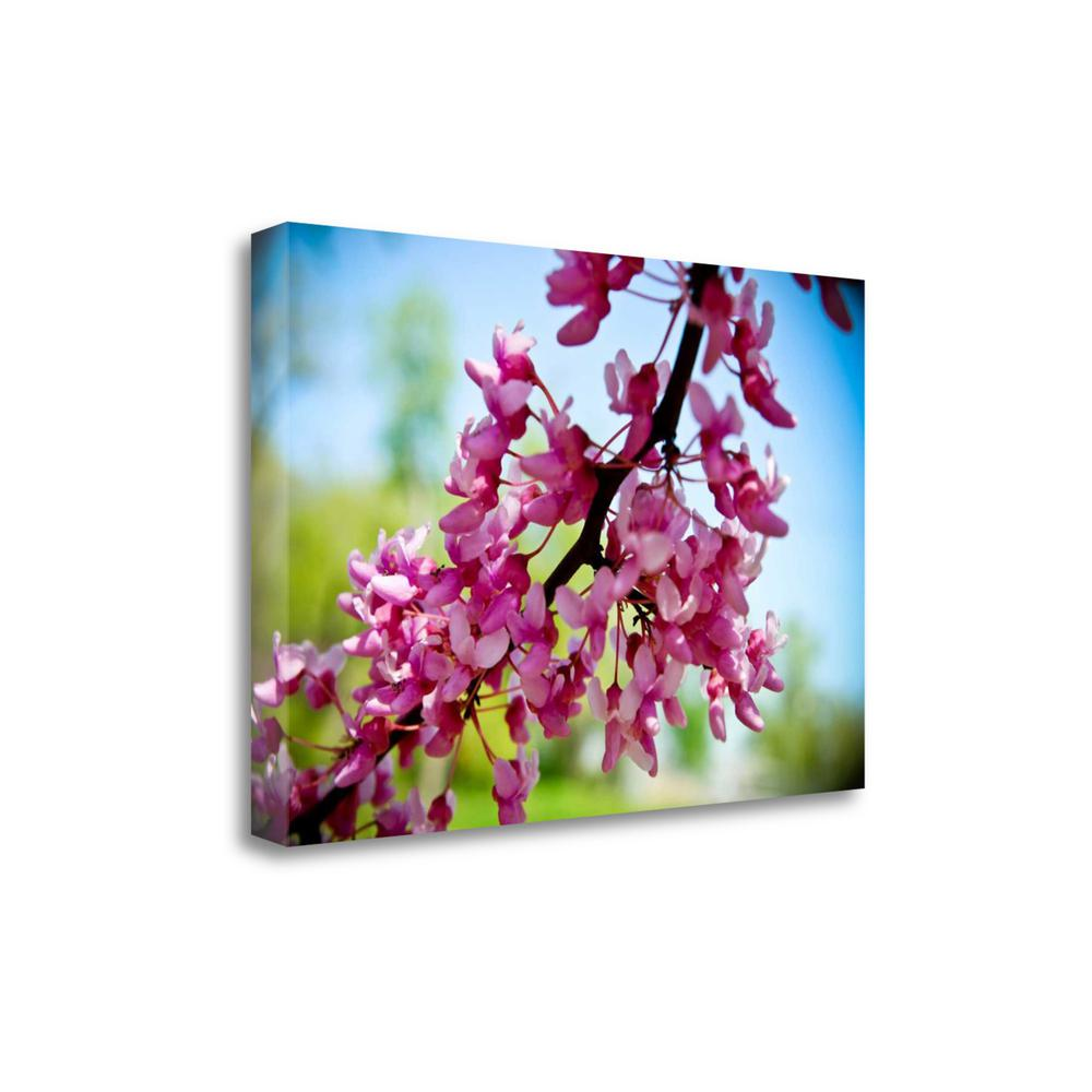 """""""Spring Redbud"""" By Amber Berninger, Giclee Print on Gallery Wrap Canvas. Picture 1"""