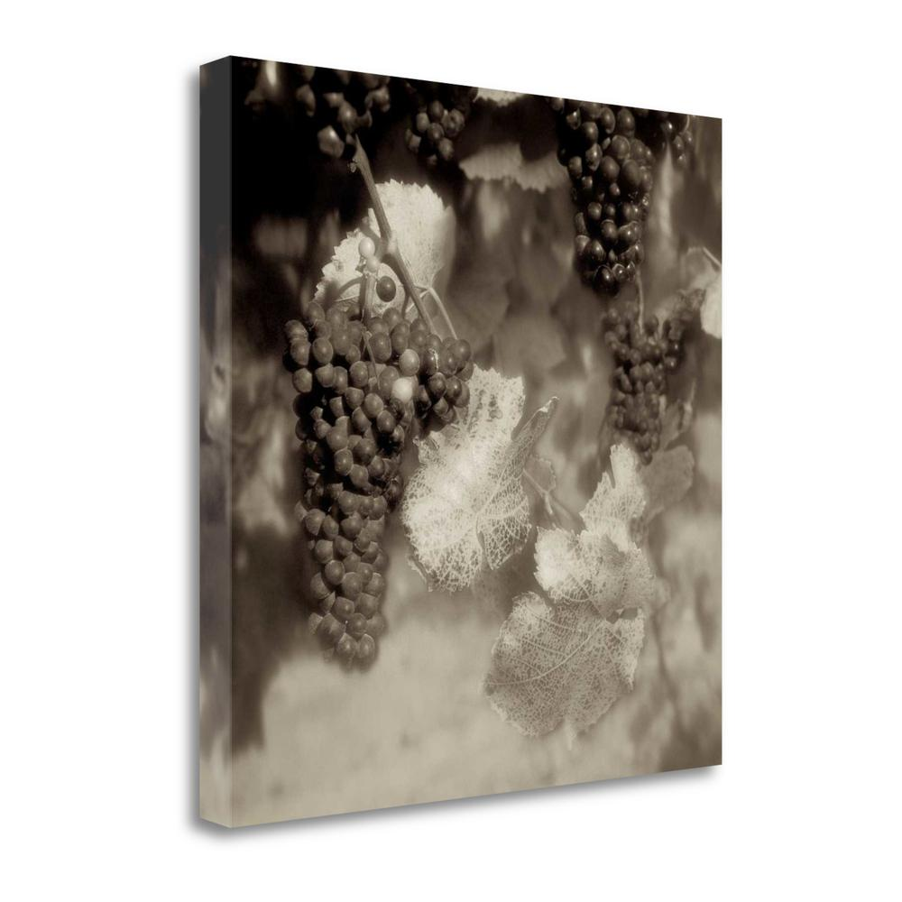 """""""Grapes Sepia - 40A"""" By Alan Blaustein, Giclee Print on Gallery Wrap Canvas. Picture 1"""